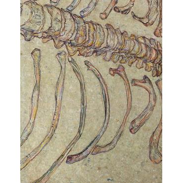 Fossil-Tales-Evite-insta