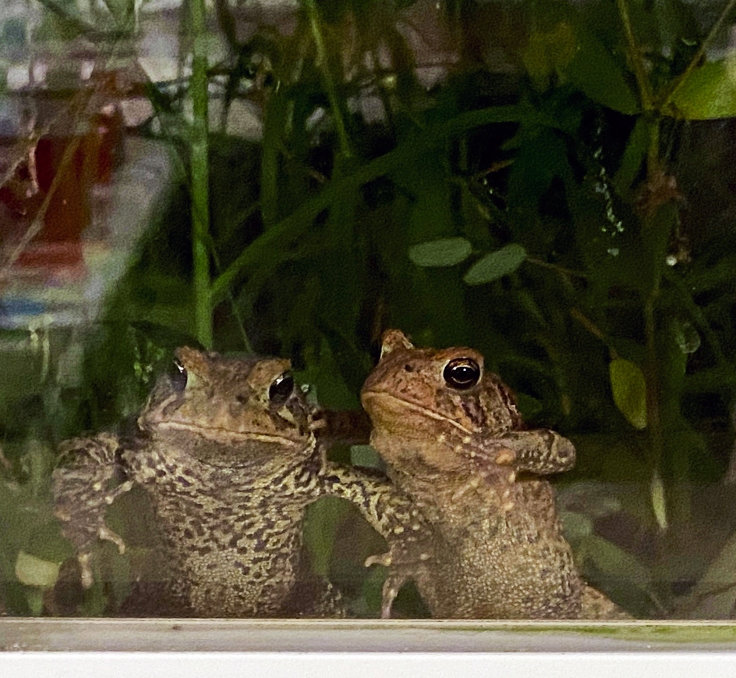 Frogs-looking-at-art